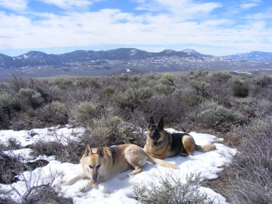 Draco and Leah keeping cool on a patch of snow, Cochetopa Hills on the horizon