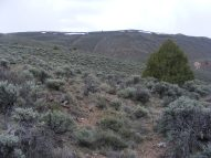 Juniper tree on the sagebrush steppe above Pole Creek