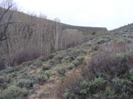 The cattle and game trail on Pole Creek