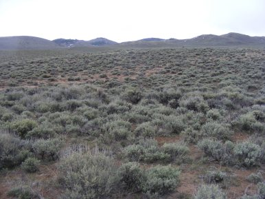 Expansive sagebrush steppe on Pole Creek