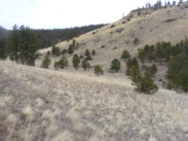Gentle swale on Big Dry Gulch