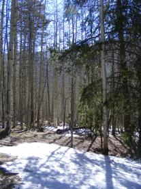 Sunny patches of forest floor covered still in snow