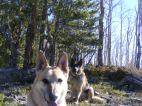 Draco and Leah above Gold Creek, happy German shepherds
