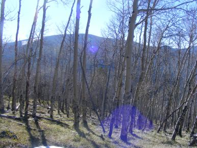 On the ridge north of Bear Gulch, looking at Quartz Dome though a yet-to-leaf-out aspen grove