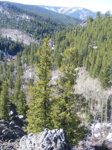 A view above Bear Gulch and down Gold Creek