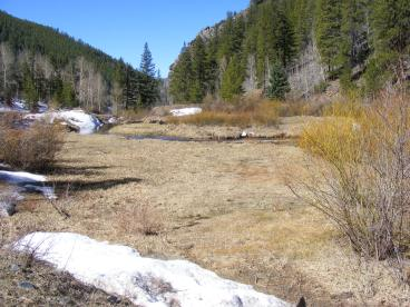 A meadow on Gold Creek