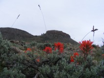 Dillon Mesa above Paintbrush flowers