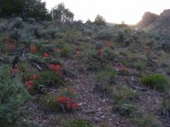 Sagebrush steppe spangled with orange Paintbrush
