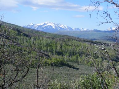 Vast aspen forests and the West Elk Mountains