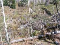 Drift Creek beaver lodge