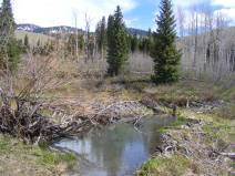 Beaver works on Drift Creek below Huntsman Ridge
