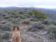 Draco on Point 8845, looking at Lookout Mountain; Tomichi Dome to the right, shrouded in mist
