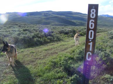 Leah and Draco during an evening hike on Gunnison National Forest Road 860.1C