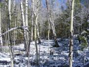 Snow in the aspen on upper East Pass Creek