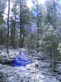 Sun shining through a snowy forest on East Pass Creek
