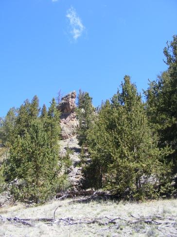 Bristlecone pine and a granitic outcropping on East Pass Creek