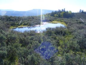 A small perennial pond adjacent to BLM Road 3115
