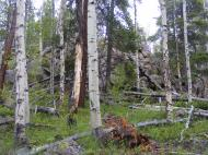 Aspen, conifers and granitic outcropping on East Willow Creek