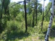 Extreme verdure near McPhee Park