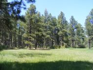 An open meadow in the ponderosa pine forest near McPhee Park