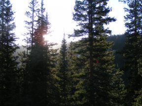 The forest above Spring Creek awash in evening light