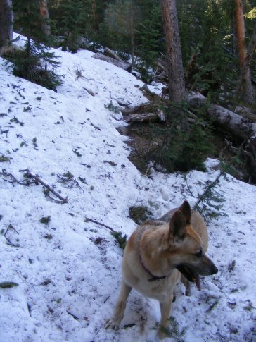 Draco on the Mill Lake Trail No. 532, at the snowdrift that turned us back