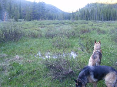 Leah and Draco in one of the upper meadow on Gold Creek