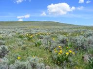The sagebrush tinted with a yellow hue from the Mule's Ears