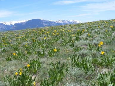 Mule's Ears and the West Elk Mountains