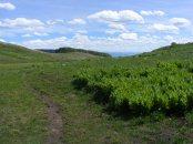 Walking east of Big Alkali Lake on Gunnison National Forest Road 829