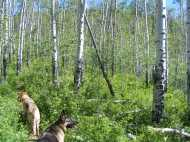 Draco and Leah in the aspen forest on the Roaring Judy Trail No. 552