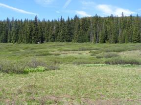 Meadow near Cement Mountain Trail No. 553