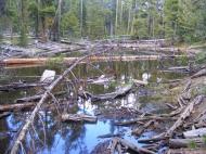 A bog along Gunnison National Forest Road 813.A2