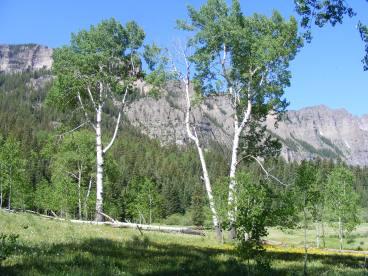 The aspen grove on Mill Creek