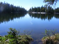 The forest reflected on Lamphier Lake