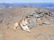 Draco at rest near the benchmark on San Luis Peak