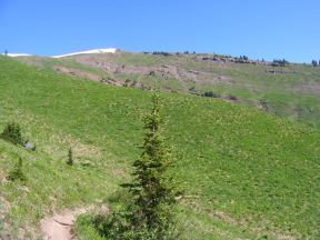 Looking up towards the high ridge of Double Top, from the trail of the same name