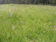 A bog with a multitude of wildflowers on East Middle Creek