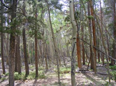 Mixed forest on Indian Creek