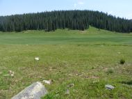 The open meadow at the upper end of Splain's Gulch