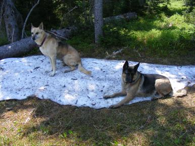 Draco and Leah resting on the last remnant from the previous Winter