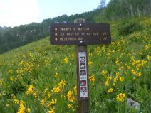 Signage for the Swampy Pass Trail No. 439