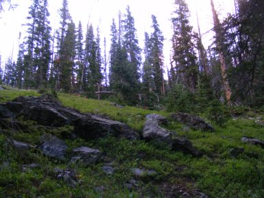 Sub-alpine forest near Mill Lake, at dusk