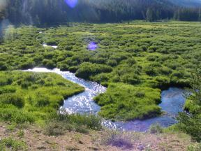 Agate Creek winding through the meadows