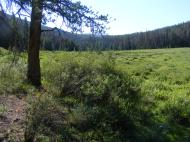 Returning to the large meadow on Agate Creek