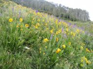 Larkspur, sunflowers, oh my... on the eastern slopes of Crested Butte