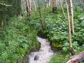 A muddy stream flowing down after heavy rains from the eastern slope of Crested Butte