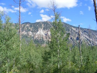 Looking out of the aspen jungle towards Mount Gunnison, below Kaufman Ridge