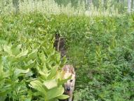 Draco and Leah on the trail, in the Corn Lily
