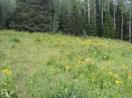 A meadow on Little Robinson Creek near the Peter Creek Trail No. 856